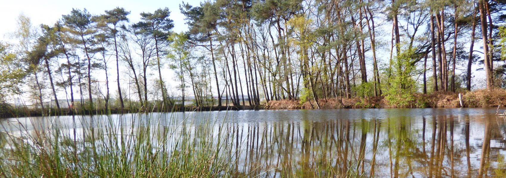 zicht op het water met op de achtergrond bomen