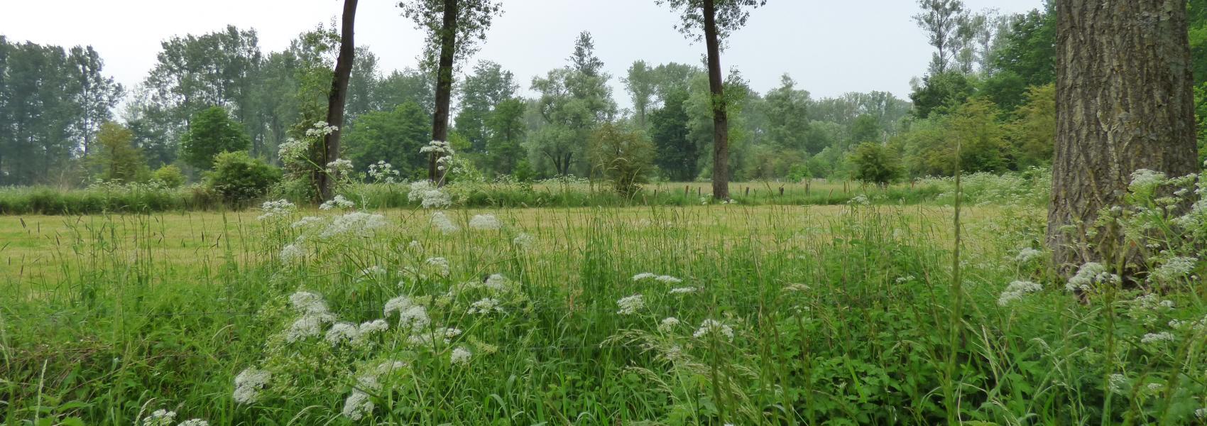 Natte graslanden De Nuchten - Griet Buyse