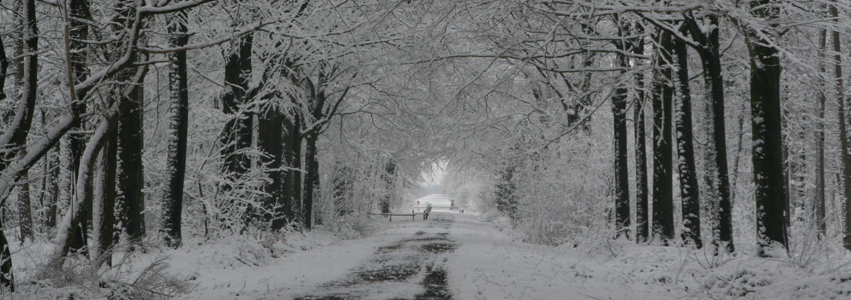 de hoofddreef in een winters kleedje gestopt