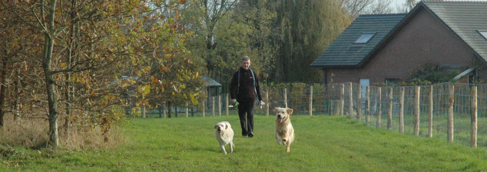 wandelaar met honden in de hondenzone