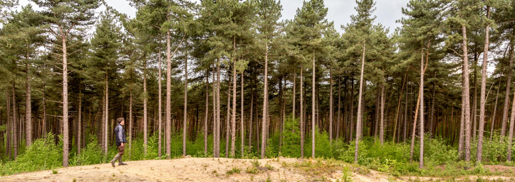 zicht op het zand en de bomen