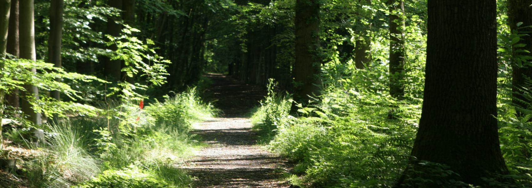 dreef in het bos