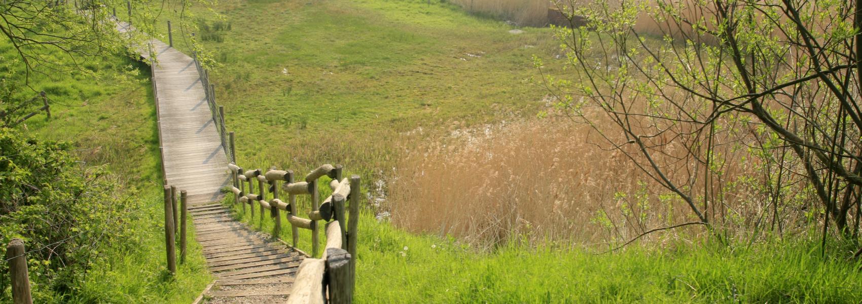 knuppelpad in het landschap