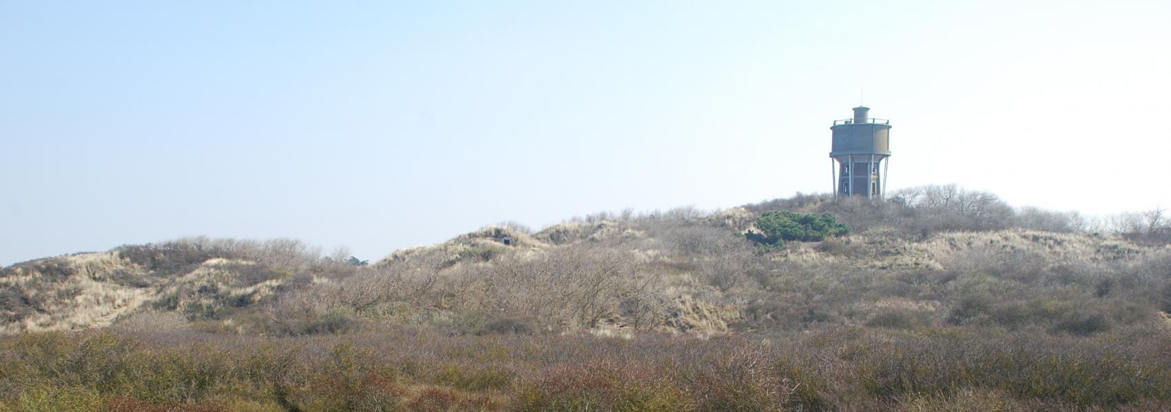 struweel met op de achtergrond de watertoren