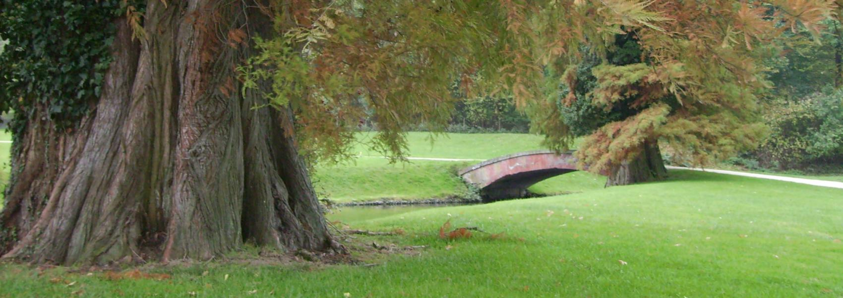 dikke boom in het landschap