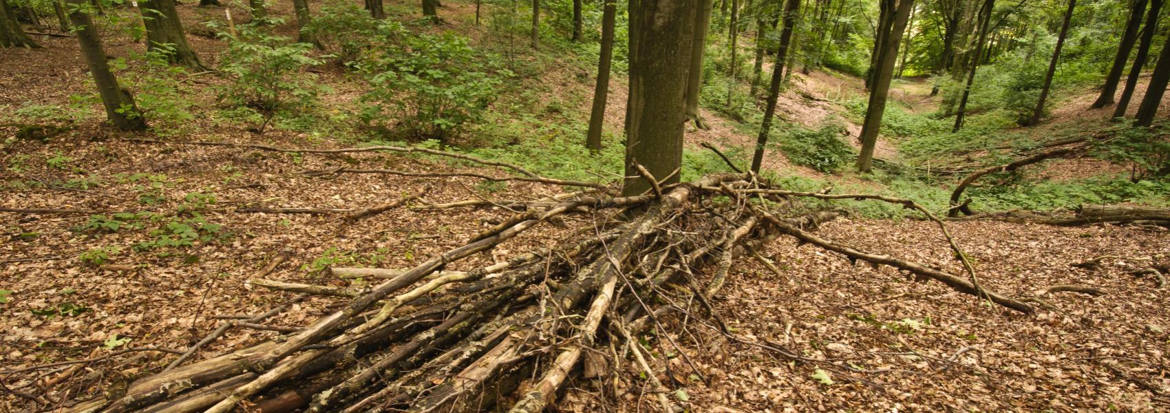 stapel lange takken met op de achtergrond zicht in het bos