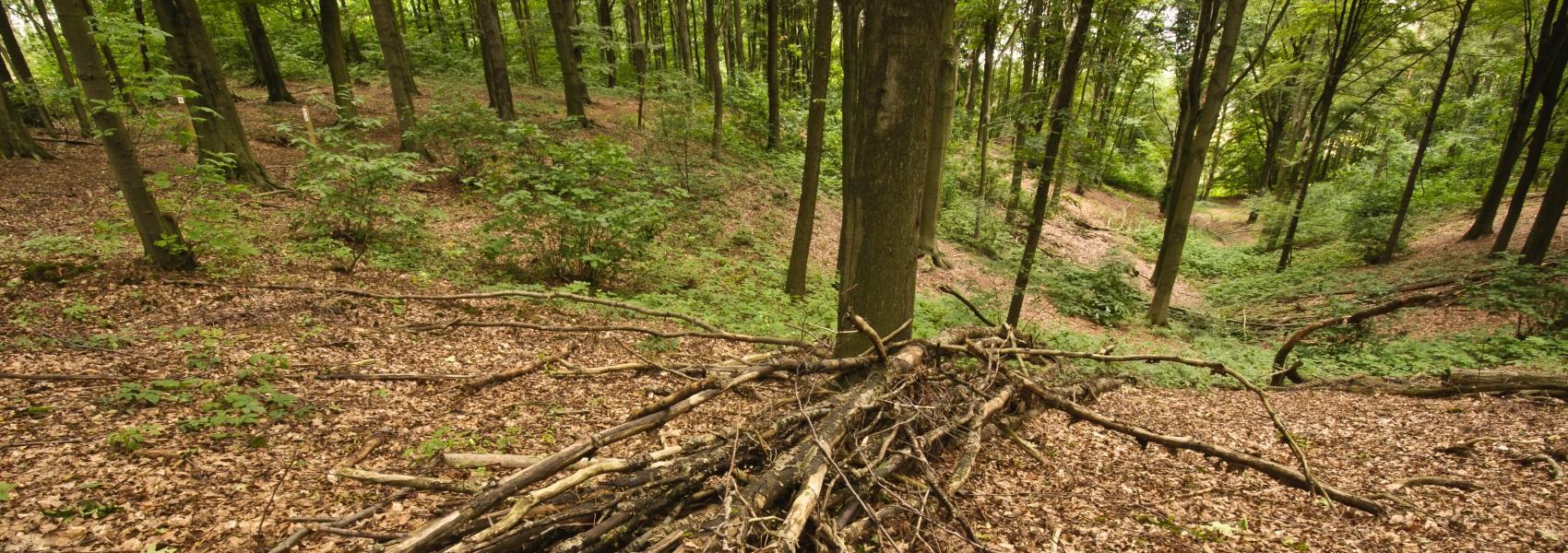 hoop takken in het bos