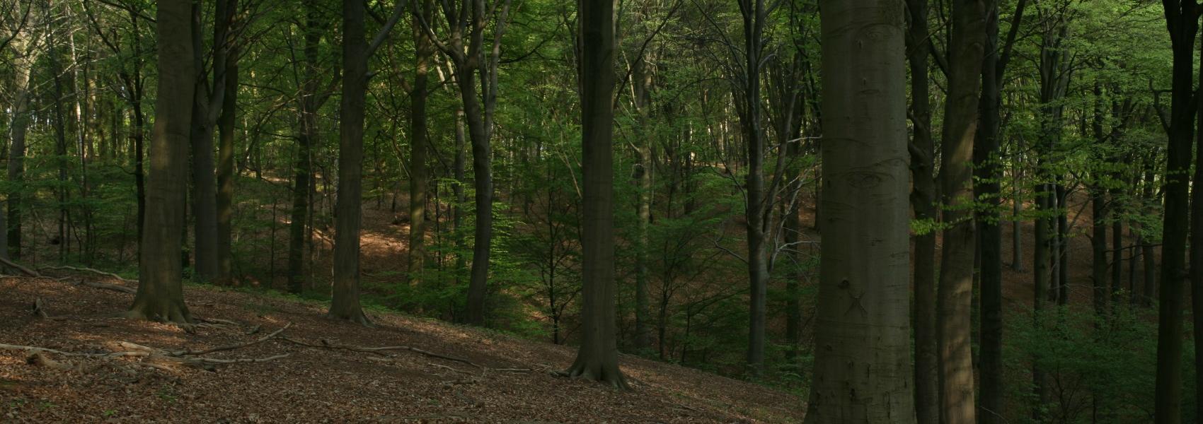 zicht in het bos