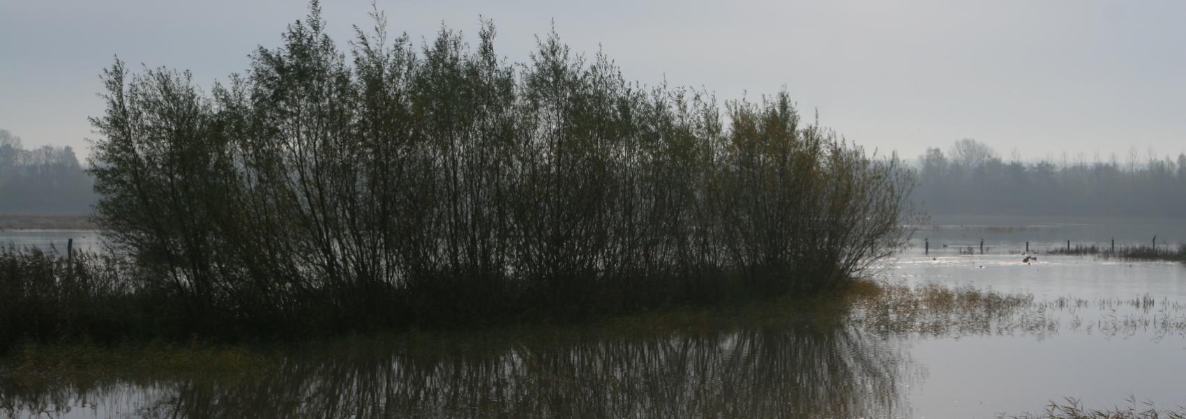 zicht op het water