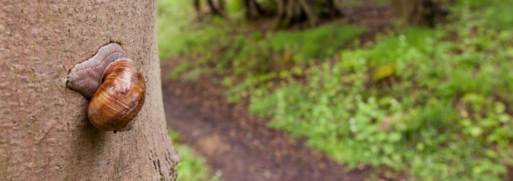 slak op een boom