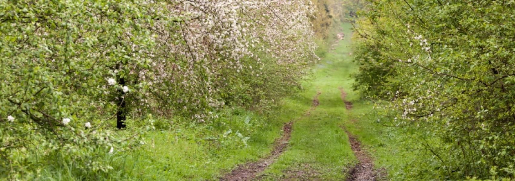 wandelpad tussen de struiken