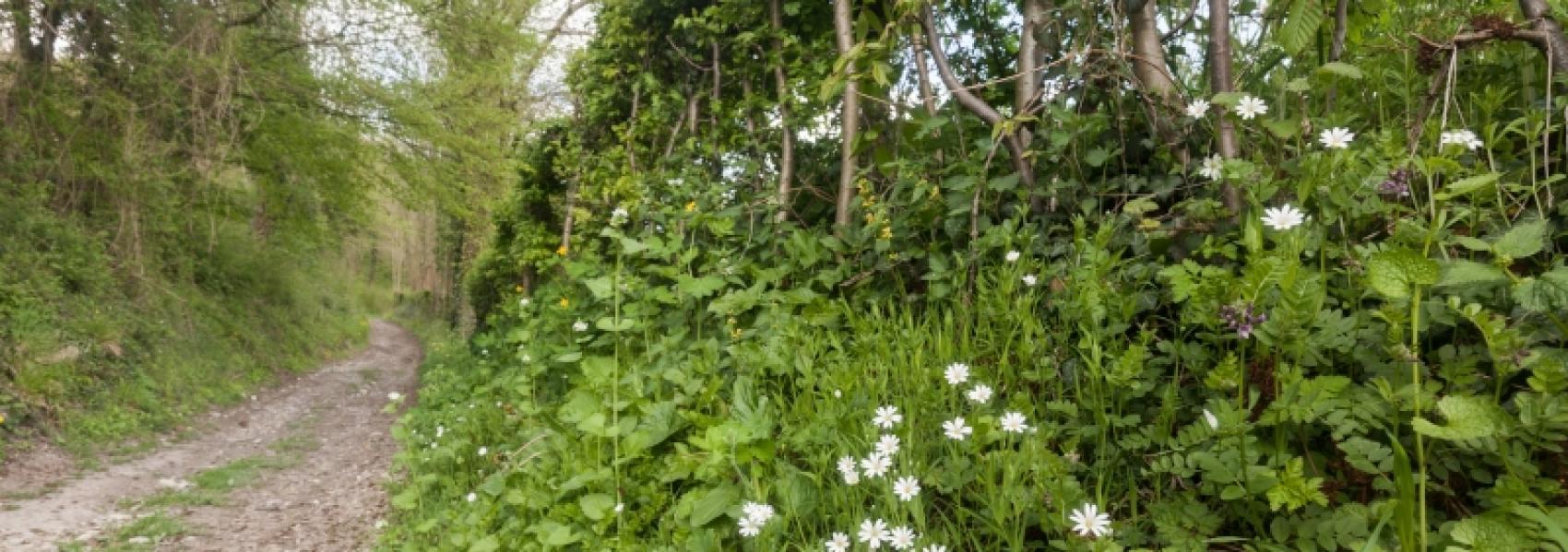 wandelpad langs berm met bloemen