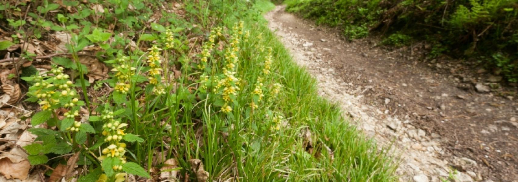 gele bloemen langs aarden pad