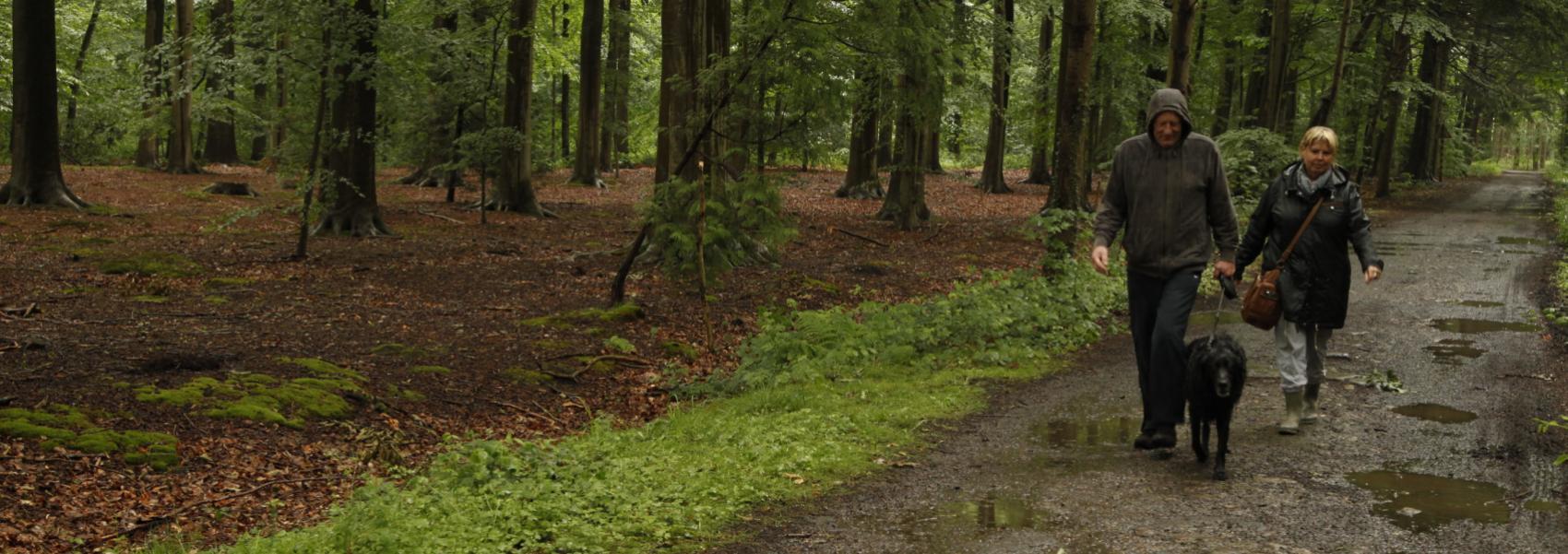 wandelaars met hond in het bos in de regen