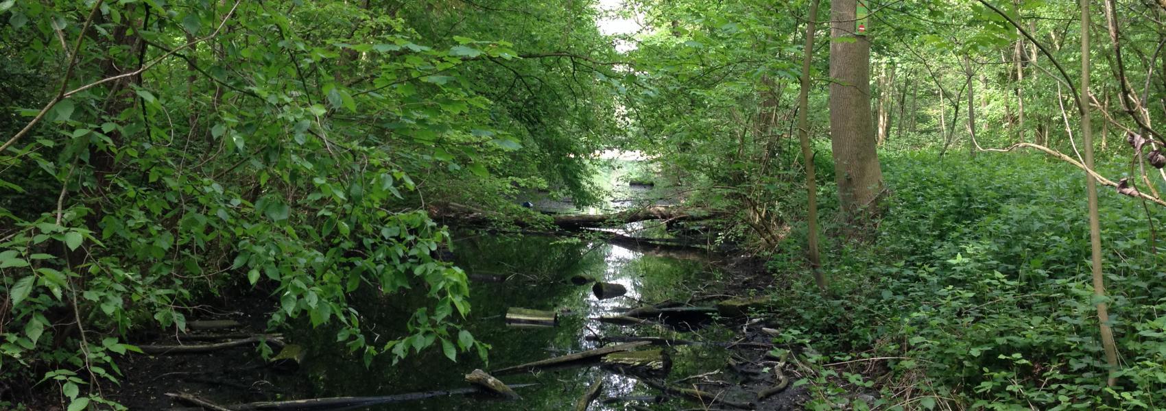 zicht op water in het bos
