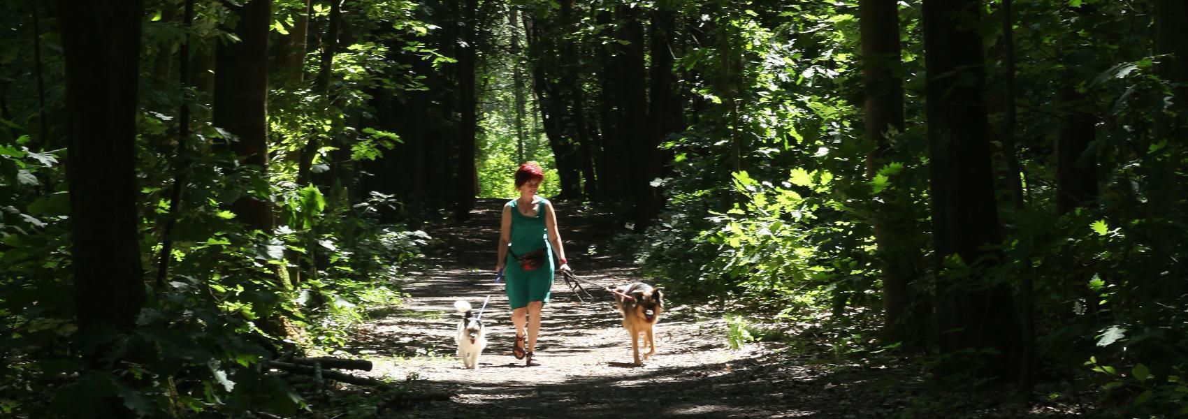 wandelaar met honden