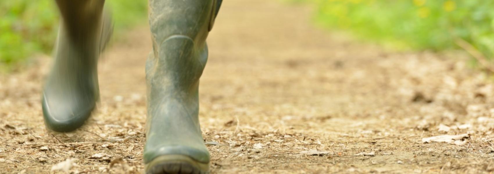 wandellaarzen