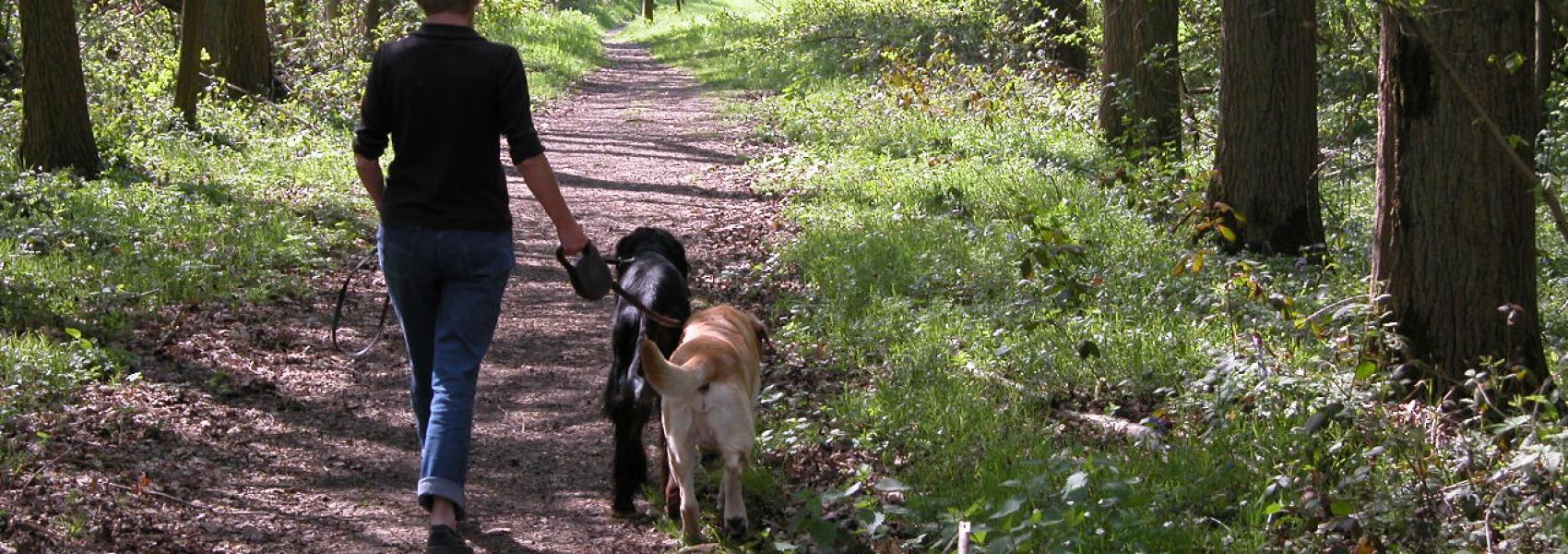 vrouwelijke wandelaar met 2 honden in het bos