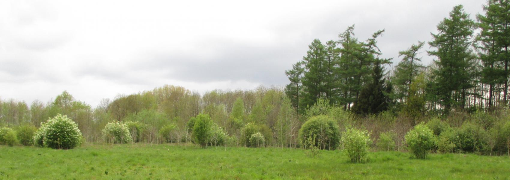 landschapbeeld de Warande