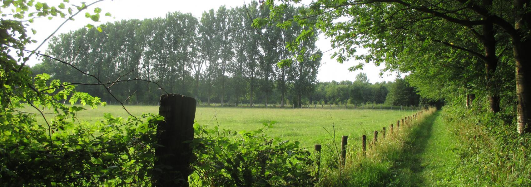 Landschapsbeeld de Warande
