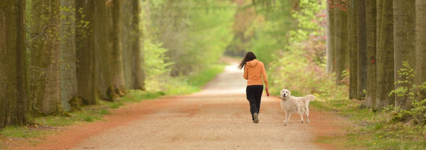 wandelaar met hond in een dreef
