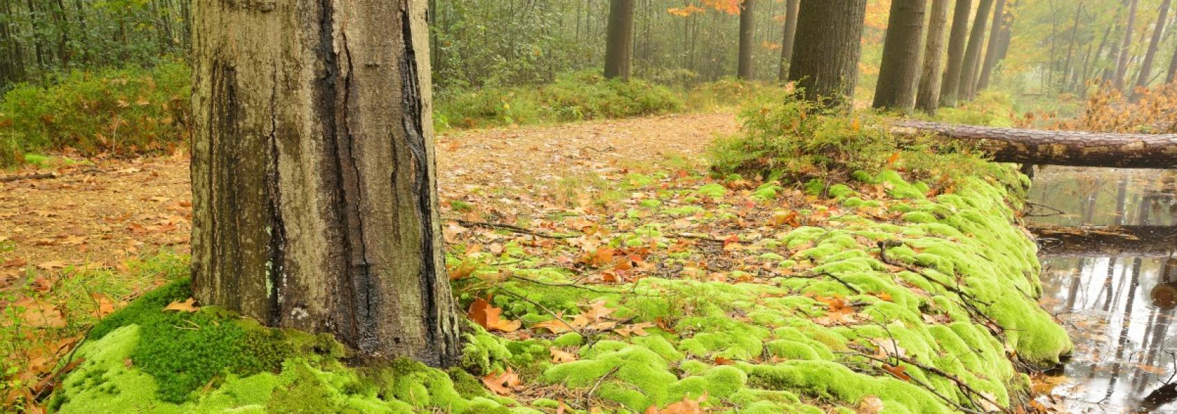 mos op de grond rond de bomen
