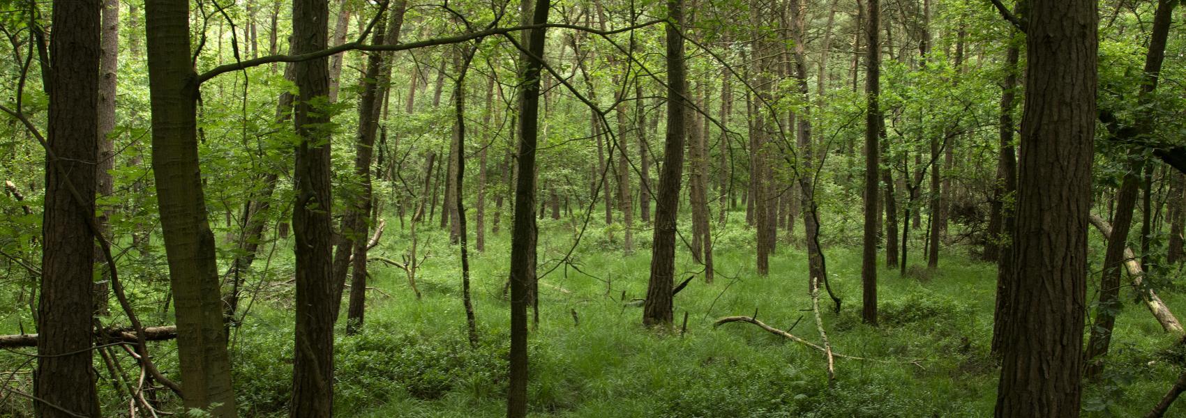 varenweide in het bos