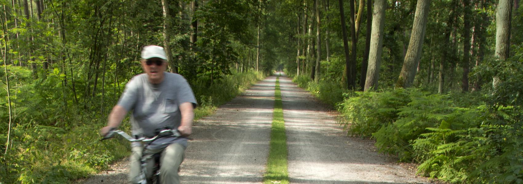 fietser op de verharde weg in het bos
